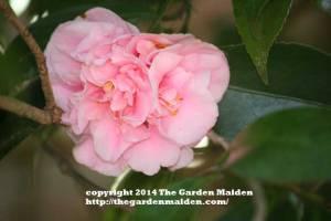 TheGardenMaiden_copyright2014_RStafne-006_WEB