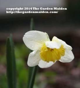TheGardenMaiden_copyright2014_RStafne-414_WEB