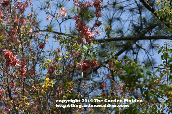 TheGardenMaiden_copyright_2014_BogueChittoStatePark_RStafne-023_WEB