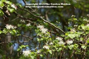 TheGardenMaiden_copyright_2014
