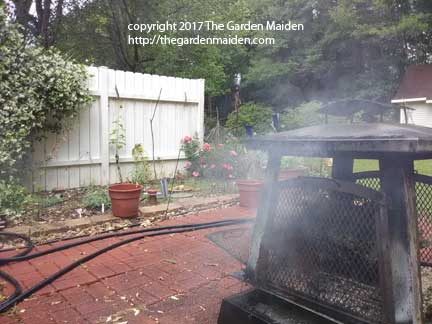 TheGardenMaiden_copyright-2017_IMG_20170416_124908