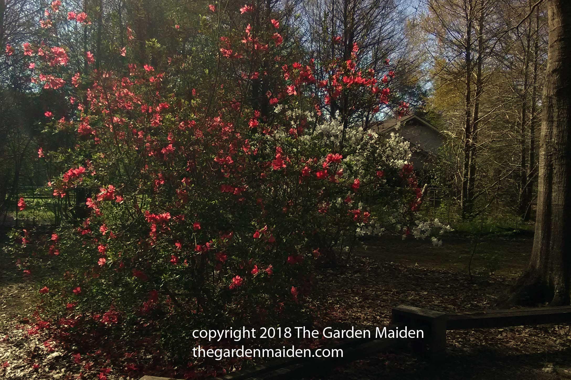 March | 2018 | The Garden Maiden